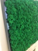 Norwegian Reindeer Moss ( Box 500g Gross ) Color Medium Green