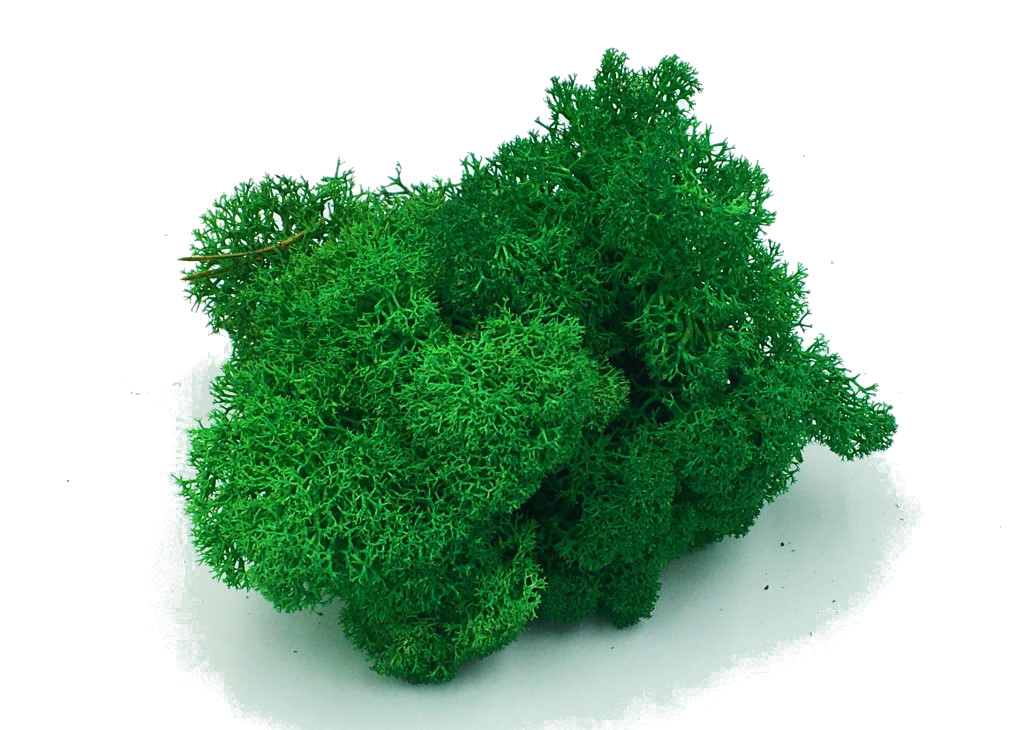 Purified Reindeer Moss Apple – Medium Green 0,5 kg FINNISH